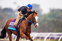 DEL MAR, CA - OCTOBER 28:  Snapper Sinclair, owned by Bloom Racing Stable LLC and trained by Steven M. Asmussen, exercises in preparation for Breeders' Cup Juvenile Turf at Del Mar Thoroughbred Club on October 28, 2017 in Del Mar, California. (Photo by Alex Evers/Eclipse Sportswire/Breeders Cup)