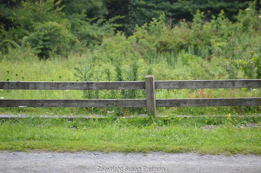 Photos from the North Carolina High Country, July, 2013