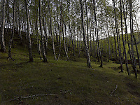 FOREST_LOCATION_90065