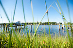 Grasses grow up from  the water's edge by Gerald Winegrad's pier on Oyster Creek.