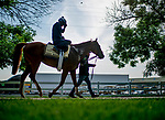 BALTIMORE, MD - MAY 15: Good Magic heads back from the track to train for the Preakness at Pimlico Race Course on May 15, 2018 in Baltimore, Maryland (Photo by Scott Serio/Eclipse Sportswire/Getty Images)