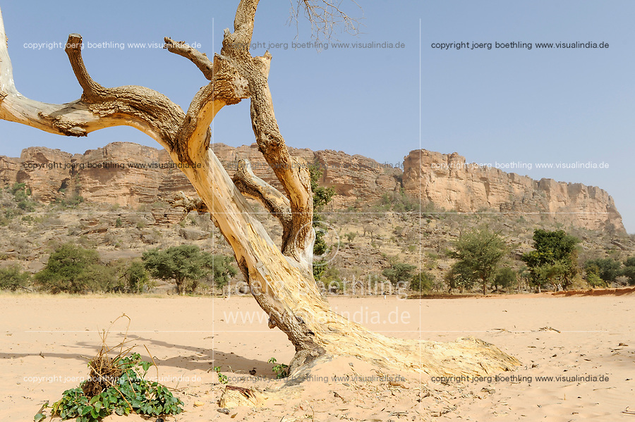 "Afrika Mali Dogon Land, absterbender Baum und Versandung der Landschaft - Klimawandel Abholzung xagndaz | .Africa Mali Dogon Country , dying tree and desertification.  -  climate change.| [ copyright (c) Joerg Boethling / agenda , Veroeffentlichung nur gegen Honorar und Belegexemplar an / publication only with royalties and copy to:  agenda PG   Rothestr. 66   Germany D-22765 Hamburg   ph. ++49 40 391 907 14   e-mail: boethling@agenda-fototext.de   www.agenda-fototext.de   Bank: Hamburger Sparkasse  BLZ 200 505 50  Kto. 1281 120 178   IBAN: DE96 2005 0550 1281 1201 78   BIC: ""HASPDEHH"" ,  WEITERE MOTIVE ZU DIESEM THEMA SIND VORHANDEN!! MORE PICTURES ON THIS SUBJECT AVAILABLE!! ] [#0,26,121#]"