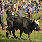 Rwanda - a cattle auction on the road from Musanze to the DRC bordrer