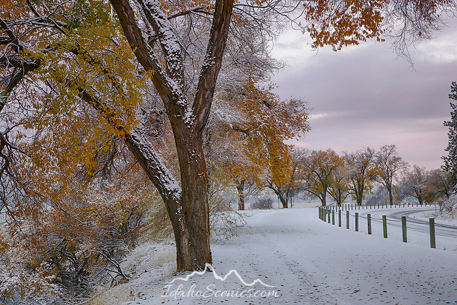 Idaho, North, Kootenai County, Coeur d'Alene.an early snowfall decorates the autumn trees along Lake shore Drive and the Centennial trail.