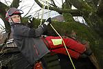 Foto: VidiPhoto<br /> <br /> ARNHEM – Boomverzorger Lodewijk Lamers van Takkenwerk Boomverzorging aan het werk in een vogelkers in Arnhem.