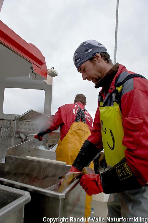 Yrkesfiskere ombord i speedsjark. ---- Fishermen on board fishing boat.
