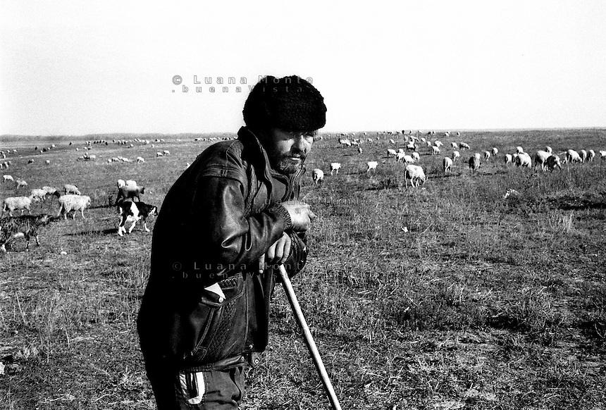 - Delta del Danubio, Nufaru. Un pastore di origine ucraina abitantedel villaggio pascola le sue pecore..- Danube Delta Area, Nufaru. A shepherd pasturing his sheeps on Danube bank. He is from ucrainian origine but lives in Nufaru village...