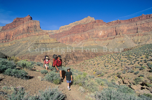 Family backpacking on the Tonto Trail near Boucher Canyon below the South Rim of Grand Canyon National Park, Arizona, AGPix_0153 .