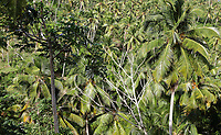 Palm trees on the road to the Mirador de la Ballenas, a viewpoint at Punta Balandra, near Samana, in the Dominican Republic, in the Caribbean. At this point on the coast there is an observatory. Picture by Manuel Cohen