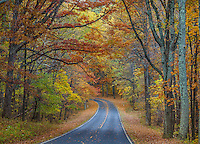 Shenandoah National Park, VA: Skyline Drive curves into the fall colors of the hardwood forest