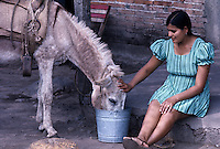 Farmer Woman feeding the donkey