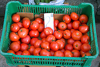 Farmer's market showing tomatoes or pomidores in Poland.  Rawa Mazowiecka  Central Poland