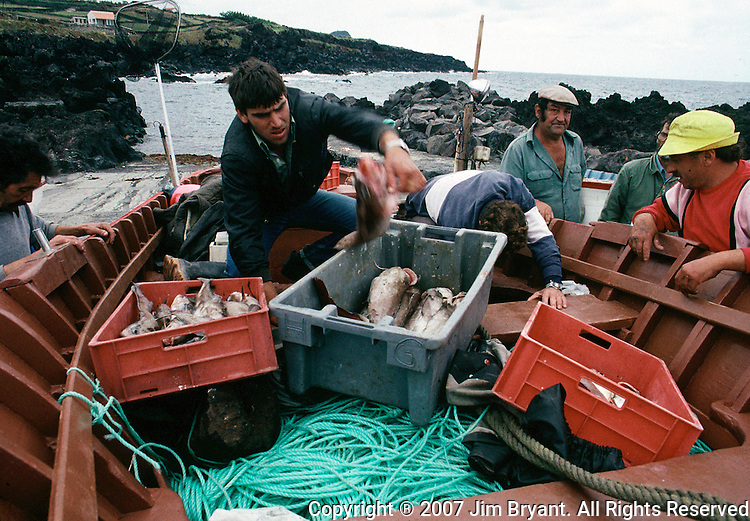 Biscoitos fisherman unload fish from an all-night trip. Freshly caught shark, snapper, and others await buyers and within hours end up in the island's superb seafood restaurants on Terceira, Azores. A seafood meal of crispy fried, baked or broiled fish, boiled carrots and potatoes, accompanied by a local white wine, costs roughly $10.00 per person in a simple restaurant across the quay in Biscoitos. Far out in the Atlantic Ocean, some 850 miles off the western coast of Lisbon, Portugal lies the 425-mile long archipelago of the Azores. (Jim Bryant Photo).....