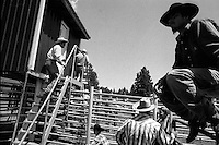 Cowboys wait in the animal staging area at the annual Lincoln Rodeo in Lincoln, MT in June 2006.  The Lincoln Rodeo is an open rodeo, which means competitors need not be a member of a professional rodeo association.