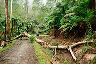 Image Ref: YV289<br /> Location: O'Shannassy Aqueduct Trail<br /> Date: 26.08.18