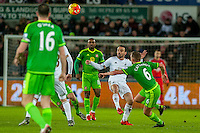 Leon Britton of Swansea in action during the Barclays Premier League match between Swansea City and Sunderland played at the Liberty Stadium, Swansea  on  January the 13th 2016