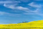 Whitman County, WA      <br /> Green and yellow crop patterns on rolling Palouse hills beneath wispy clouds