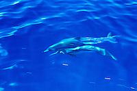 Dolphins Palau Micronesia