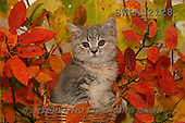 Carl, ANIMALS, photos(SWLA2128,#A#) Katzen, gatos