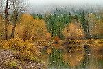 Idaho, North, Bonner County, Priest Lake. A small fishing pond in the Kaniksu National Forest on a misty autumn day.
