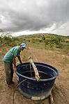 Comunidade de Jerusalém, município de Rubim na região do baixo Jequitinhonha, Norte de Minas Gerais. Nessa região é possível encontrar três tipos de biomas: caatinga, cerrado e mata atlântica. A ASA Brasil, Articulação no Semiárido Brasileiro, tem implementado em diversas comunidades no Norte de Minas o Programa Uma Terra e Duas Águas (P1+2) e o Programa Um Milhão de Cisternas (P1MC) que tem como objetivo viabilizar a captação e armazenamento de água de chuva nessas comunidades para consumo humano, criação de animais e produção de alimentos. Entre os parceiros para implementação dos projetos tem destaque na região a Cáritas Diocesana de Almenara. Mutirão para construção de calçadão, também conhecido como terreirão. Agenor Gomes de Souza.