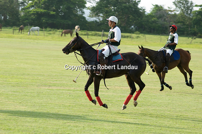 Polo horses appear to be in flight as they run across field in Jamaica