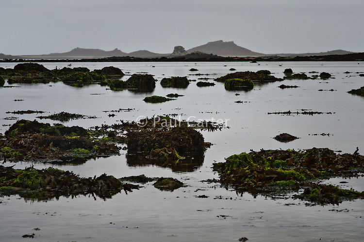 Seawweed covered rocks on the shore of the island of Tresco with the island of Sampson in the distance  13/10/08