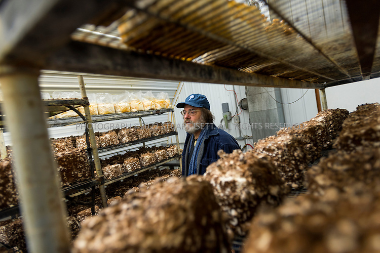 3/22/2013--Shelton, WA, USA..Paul Stamets, 57, is an American mycologist, author, and advocate of bioremediation and medicinal mushrooms and owner of Fungi Perfecti, a family run business that specializes in making gourmet and medicinal mushrooms. ..Here he inspects mushrooms in a grow room at the farm...©2013 Stuart Isett. All rights reserved.