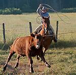 Cowboy Photography Workshop   Erickson Cattle Co. ..Wyatt Hansen ... Photo by Al Golub/Golub Photography