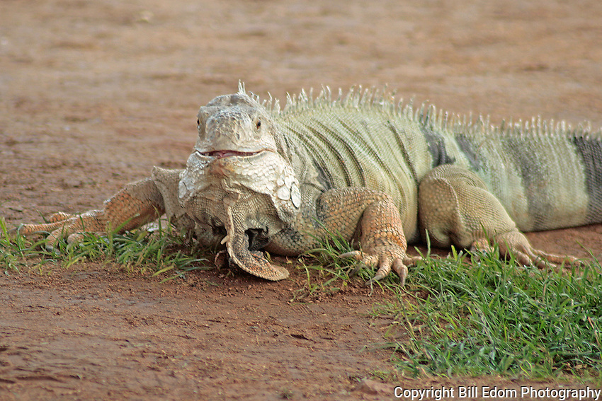 One Happy Lizard.