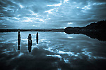 Old wharf piles at Okarito Lagoon. Westland Region. New Zealand.