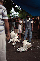 March 7th, 2010_DILI, TIMOR-LESTE_ Timorese take in a cock fight, which is as close to a national sport as Timor has. Thousands of US dollars can be at stake in a single bout, but is always a fight to the death. Photographer:  Daniel J. Groshong