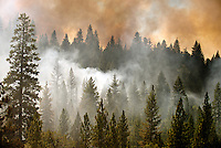 Smoke rises from a spot fire that occurred off Highway 120 as the Rim Fire continues to burn, near Groveland, California, USA on 26 August 2013. The wildfire has burned nearly 234 square miles (607 square kilometers) and only 15% contained. (Alvin Jornada/European Pressphoto Agency)