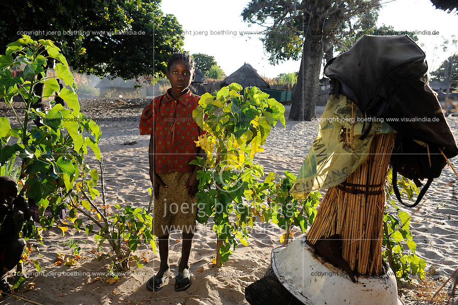 "Afrika Sambia Barotseland Mongu, Lozi Dorf Ilundu , kleine Jatropha Pflanzen  | .Africa ZAMBIA Barotseland Mongu Lozi village Ilundu .| [ copyright (c) Joerg Boethling / agenda , Veroeffentlichung nur gegen Honorar und Belegexemplar an / publication only with royalties and copy to:  agenda PG   Rothestr. 66   Germany D-22765 Hamburg   ph. ++49 40 391 907 14   e-mail: boethling@agenda-fototext.de   www.agenda-fototext.de   Bank: Hamburger Sparkasse  BLZ 200 505 50  Kto. 1281 120 178   IBAN: DE96 2005 0550 1281 1201 78   BIC: ""HASPDEHH"" ,  WEITERE MOTIVE ZU DIESEM THEMA SIND VORHANDEN!! MORE PICTURES ON THIS SUBJECT AVAILABLE!! ] [#0,26,121#]"