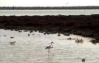 Camargue, Saline du Girau