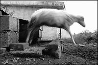 una pecora. a sheep.