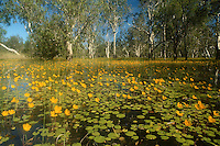 Yellow Waters in bloom Kakadu National Park, Northern Territory, Australia