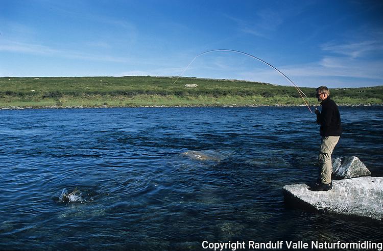 Mann kjører stor lake trout på flue i øvre del av Coppermine River. ----- Man figthing a large lake trout in the upper parts of Coppermine River.
