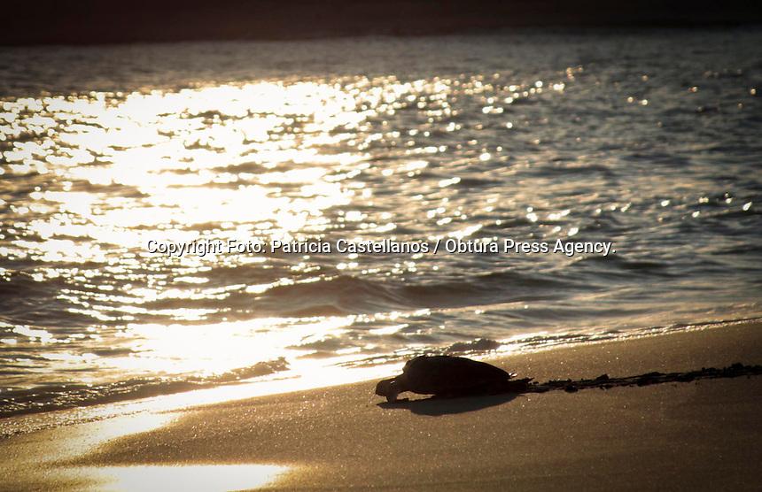 Oaxaca de Ju&aacute;rez.-   La playa Mazunte se rode&oacute; de armon&iacute;a ante un suceso que representa la fraternidad entre el humano y la naturaleza, conjuntando a los habitantes de la zona, turistas y parte del personal de ambientalistas en pro a la preservaci&oacute;n de la tortuga marina.<br />  <br /> Y es que este suceso que se lleva a&ntilde;o con a&ntilde;o en esta playa caracterizada por la protecci&oacute;n a esta especie de la fauna marina, representa un gran esfuerzo por parte de un sector que a&uacute;n tiene la esperanza en seguir conservando el equilibro ambiental, aval&aacute;ndose en el respeto a los animales y su coexistencia con el hombre.<br />  <br /> En este contexto, fue alrededor de las 6 de la tarde cuando se vislumbraba la puesta de sol en esta maravillosa bah&iacute;a; se inici&oacute; con este evento por dem&aacute;s asombroso, en donde fueron liberadas de cautiverio 200 tortugas golfinas, 80 tortugas prietas y una tortuga Carey que estuvo en recuperaci&oacute;n despu&eacute;s de haber sido encontrada herida.<br />  <br /> A decir de Martha Harfush, Coordinadora del &aacute;rea de sanidad del Centro Mexicano de la Tortuga, el proceso previo a la liberaci&oacute;n de estas dos especies tuvo diferentes procedimientos; &ldquo;En el caso de la especie de tortuga prieta fueron 7 meses de estar en cautiverio, por otro lado las golfinas nacieron en la ma&ntilde;ana, es importante destacar que lo mejor para estos animalitos es liberarlos en el mismo momento en que nacen&rdquo;.<br />  <br /> Describi&oacute; que los dos procedimientos tuvieron diferentes pasos, ya que las circunstancias de origen fueron distintas: &ldquo;Las que nacen de manera natural es mejor que se vayan solas al mar para que ellas empiecen su ciclo de vida, ellas tienen un saco vitelino que les da hasta para 15 d&iacute;as mientras buscan su propio alimento, las que tienen 7 meses por instinto empiezan a buscar su alimento, ellas se caracterizan por que tienen un frenes