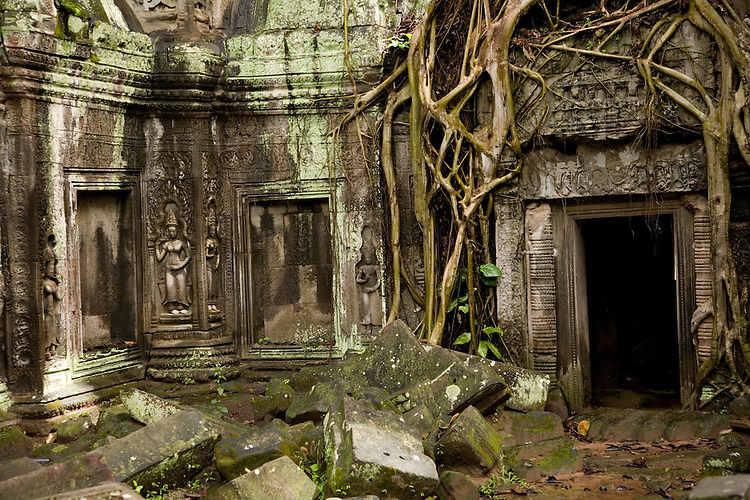 Creeper vine covered Ta Prohm Temple in Angkor, Cambodia