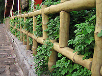 Wide wooden fence leading to garden