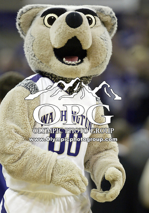 07 March 2009:  Washington Huskies mascot Harry pumped up the crowed during a timeout against Washington State at the Bank of America Arena at Hec Edmundson Pavilion in Seattle, WA.  Washington won 67-60 over Washington State and captured the Pac-10 title.