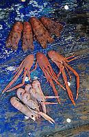 """Europe/France/Bretagne/29/Finistère/Le Guilvinec: Pêche à la langoustine sur le """"Gwenvidik"""" - Détail langoustines et galathées"""