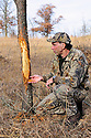 00273-043.20 White-tailed Deer Hunting: Hunter in Realtree AP examines large buck rub on jack pine in meadow likely made by large buck.  Note shredded bark at base of tree. Hunt, rub line, antlers.