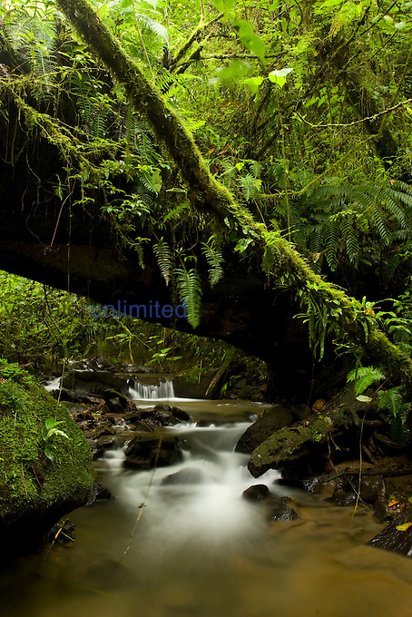 Cloud forest stream in Juan Castro Blanco National Park, Costa Rica