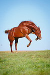 20160911 Cortney Horses