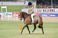 Child's Hunter Pony NE 12.2hh
