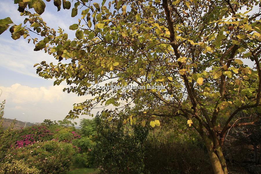 Israel, Carmel. Tishbi Garden in Zichron Ya'acov