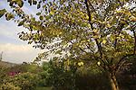 G-081 Tishbi Garden in Zichron Ya'acov