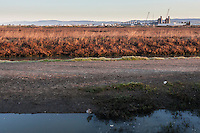 In the foreground, a shorebird, a Willet.  In the background, a natural gas-fired power plant, the Russell City Energy Center.  In between, wetlands, the Hayward Regional Shoreline at sunrise.